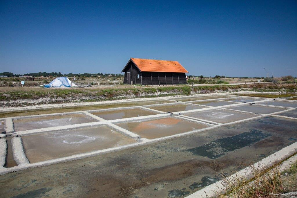 marais salants Vendée