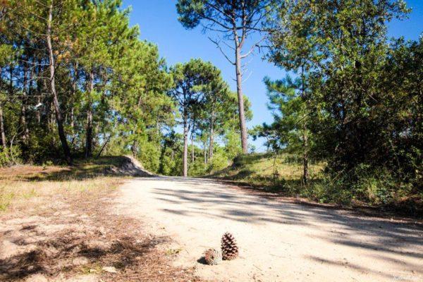La forêt de Saint Hilaire de Riez en Vendée