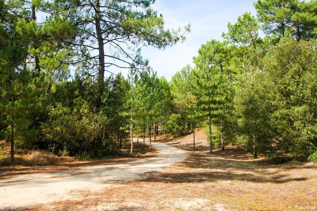 camping proche foret Vendée